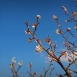 ZenFone Zoomのカメラ(単焦点モード)で撮影した写真